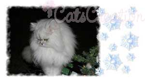 Beautiful Persian Cat looking to the side by tree