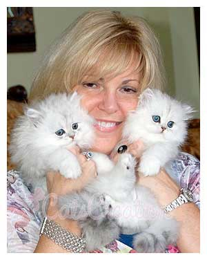 Persian Kittens for Sale, Persian Cat Breeds, Doll Faced Silvers ...