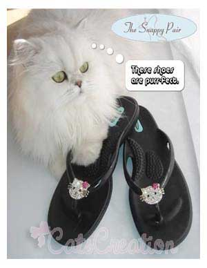 Persian Cat with shoes