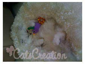 sleeping Persian Kitten with toys in cozy
